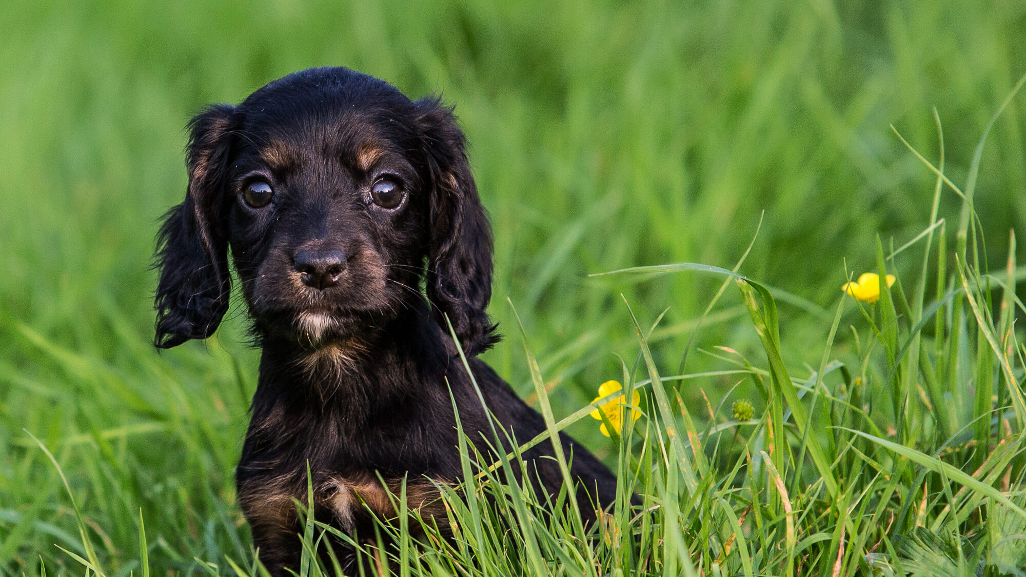 Puppy in field